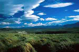 Grasslands of Patagonia