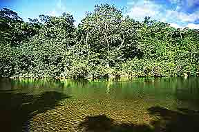 Guatemala River Rainforest