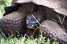 Galapagos tours of tortoises and rare wildlife